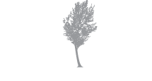 SilverBirch Hotels &