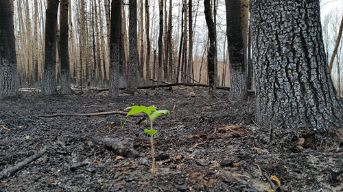 Fort McMurray Forest